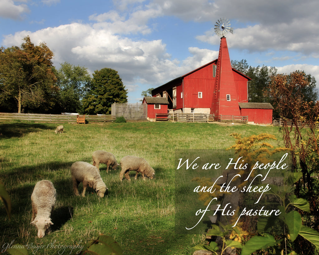 Flock of sheep in pasture and red barn with scripture verse