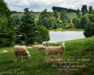 Flock of Sheep on Green Hill with Pond in background, and scripture verse