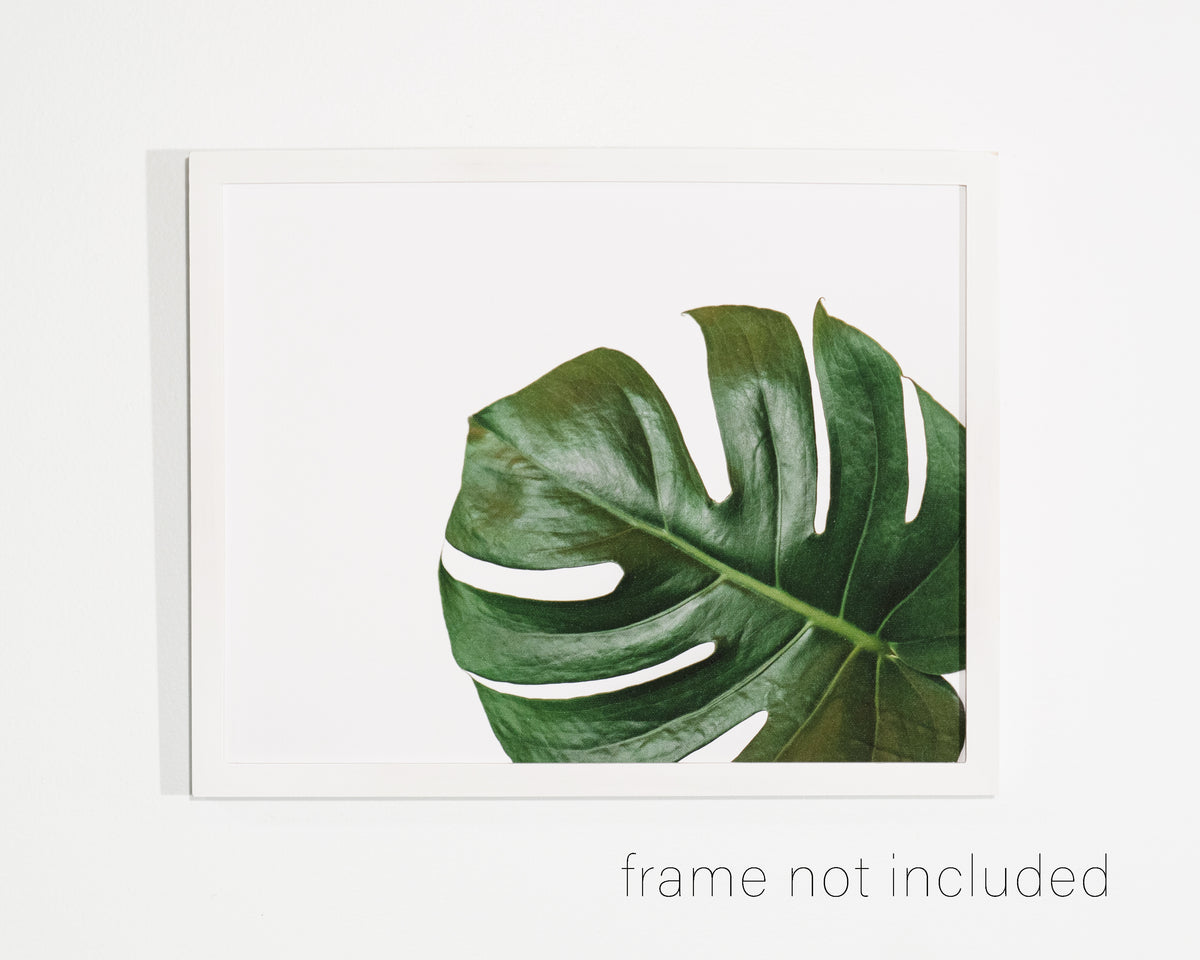 framed print of Monstera Leaf in lower right corner with white background