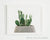 framed print of Bonny ear cactus in gray pot