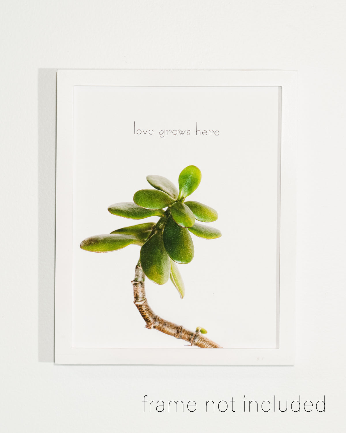 framed print of Jade plant with white background