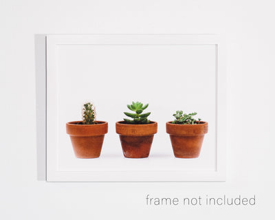 framed print of Three potted plants, a cactus and two succulents with white background