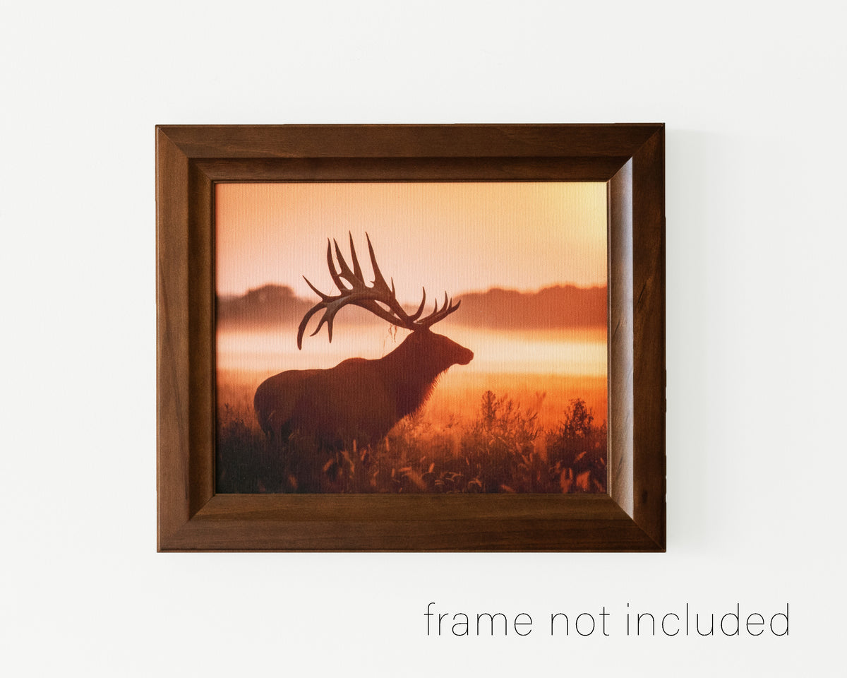 framed print of Elk in meadow on a foggy morning during sunrise