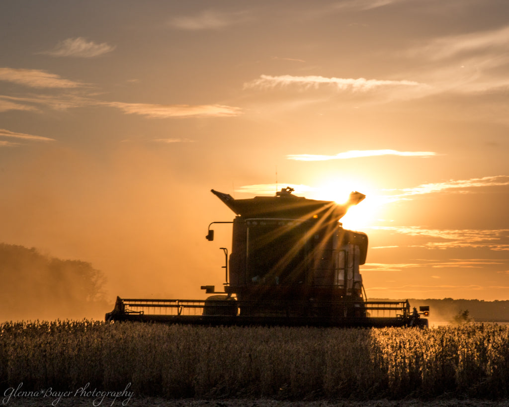 Silhouette of combine in a bean field at sunset