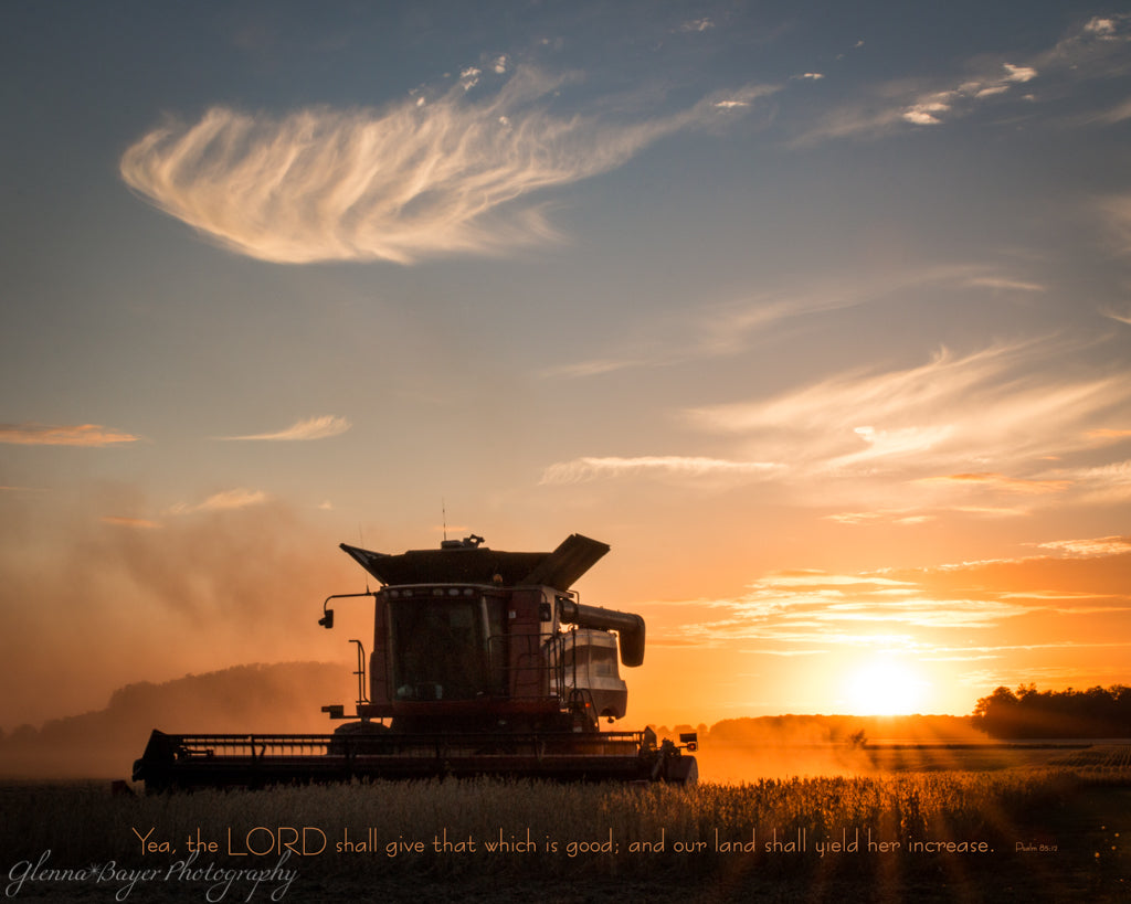 Silhouette of combine in bean field at sunset
