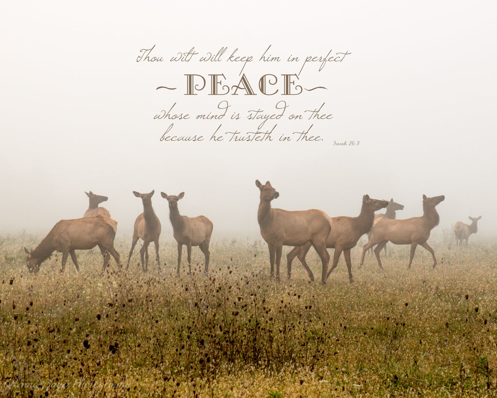 Elk herd in a meadow on a foggy morning with scripture verse
