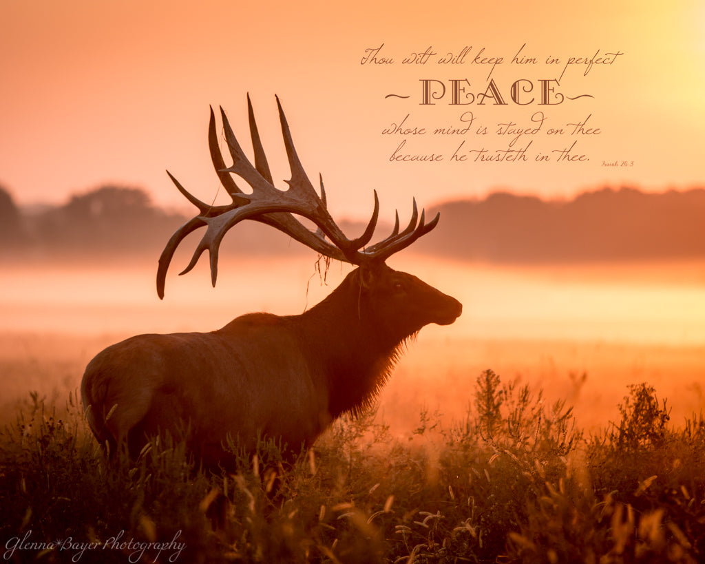 Elk in meadow on a foggy morning during sunrise with scripture verse