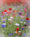 Enon Poppy Field, Bible Verse, Blue, Green, Purple, Red, Flowers, Summer