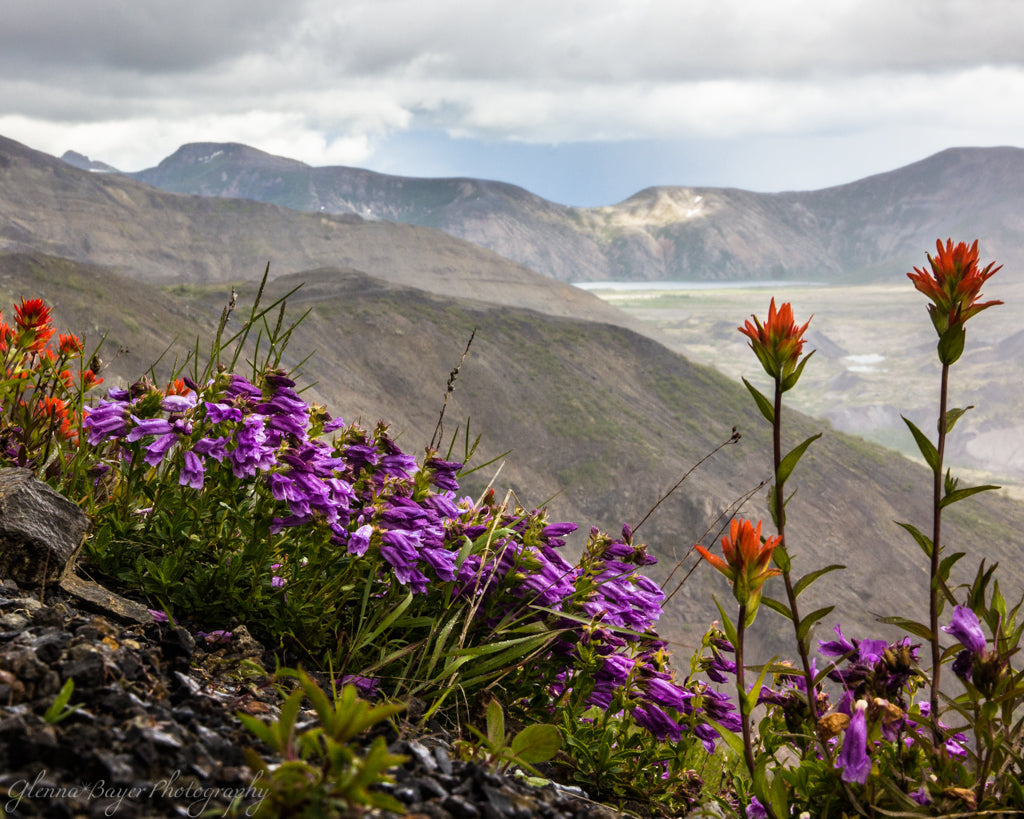 Flowers at Mt. St. Helens (0148)