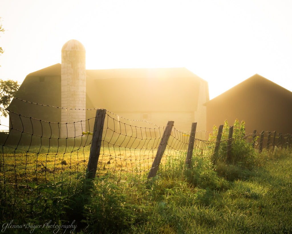 Fence row, pasture, and barns in a sunny morning glow