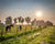 Horses in a pasture with barn on sunny, foggy morning