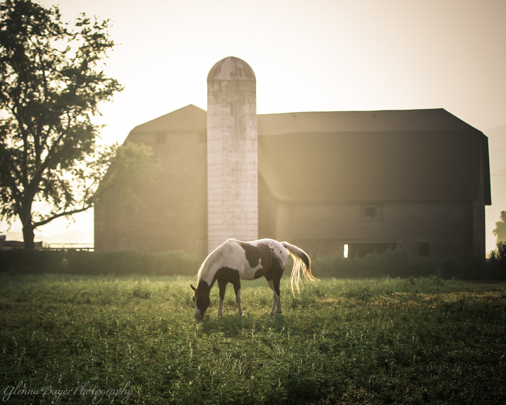 Horse grazing in pasture with barn on a foggy morning