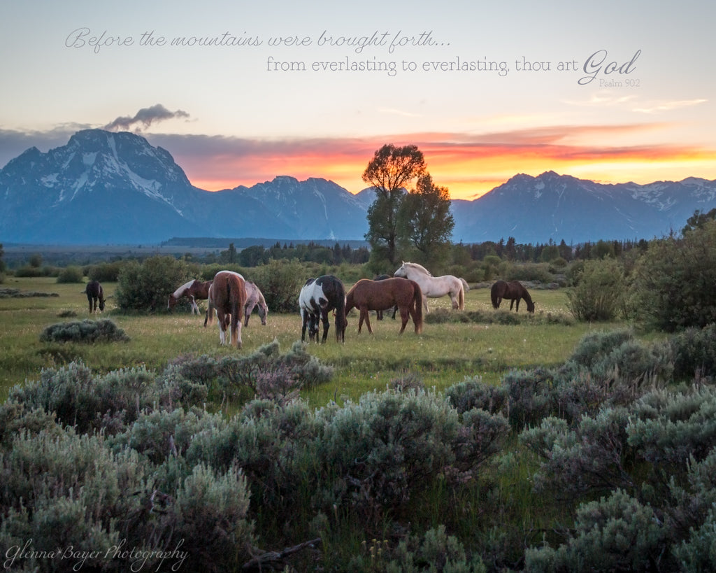 Horses grazing in pasture with Tetons in distance during sunset with scripture verse