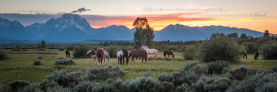 Horses grazing in pasture with Tetons in the distance during sunset