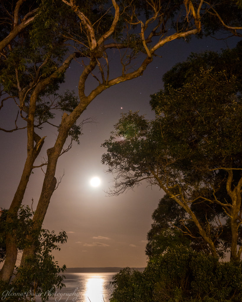 Eucalyptus trees and moonrise over Jervis Bay in Australia