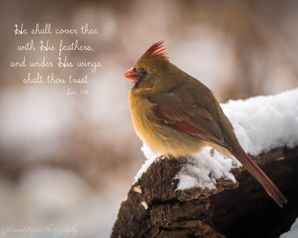 Cardinal bird perched on log in winter with scripture verse