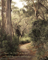Path of Light through the Australian Bush, Green, Tan, Trees, Bible Verse