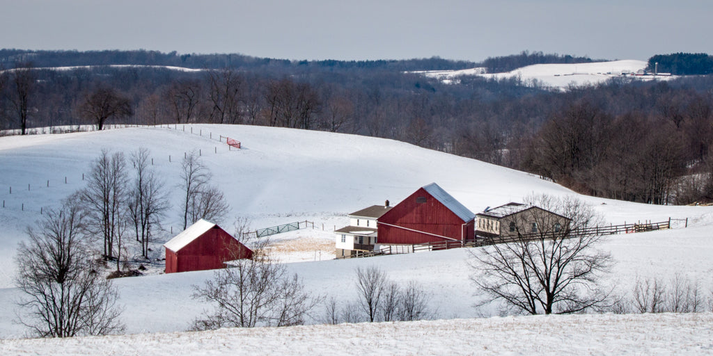 Red barns in snow in Holmes County, Ohio