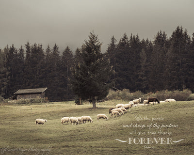 Flock of sheep in a rolling pasture with scripture verse