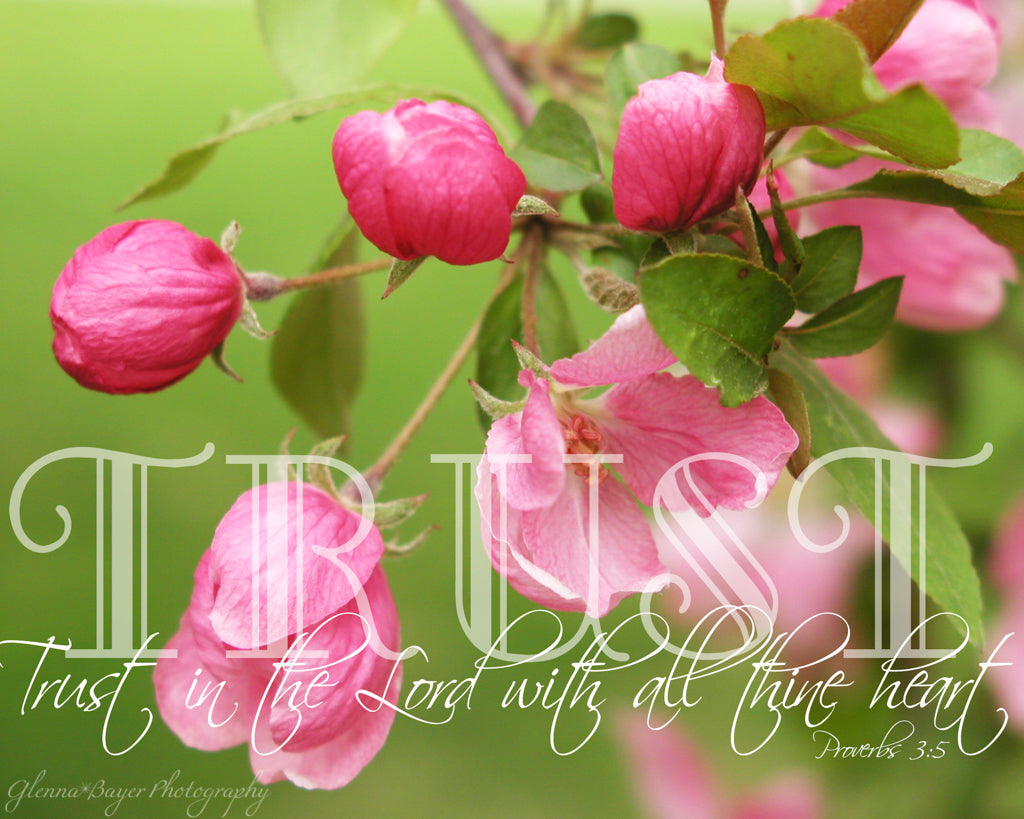 Pink Crabapple Blooms with scripture verse