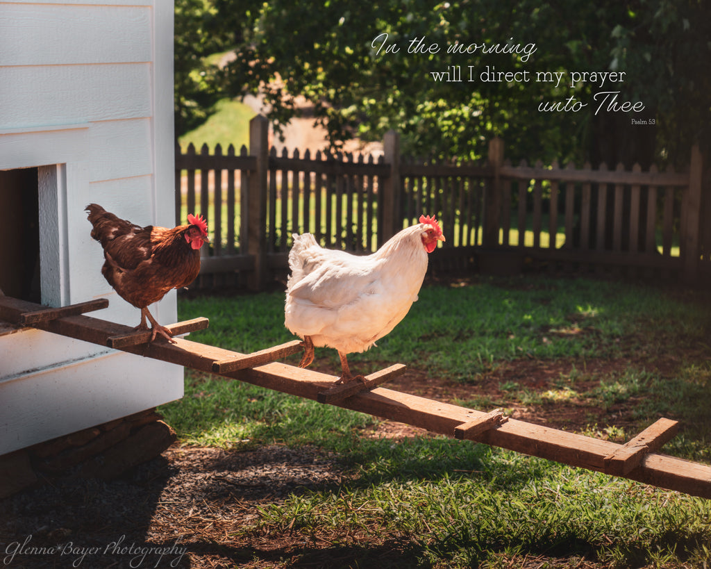 Chickens coming out of chicken house with scripture verse