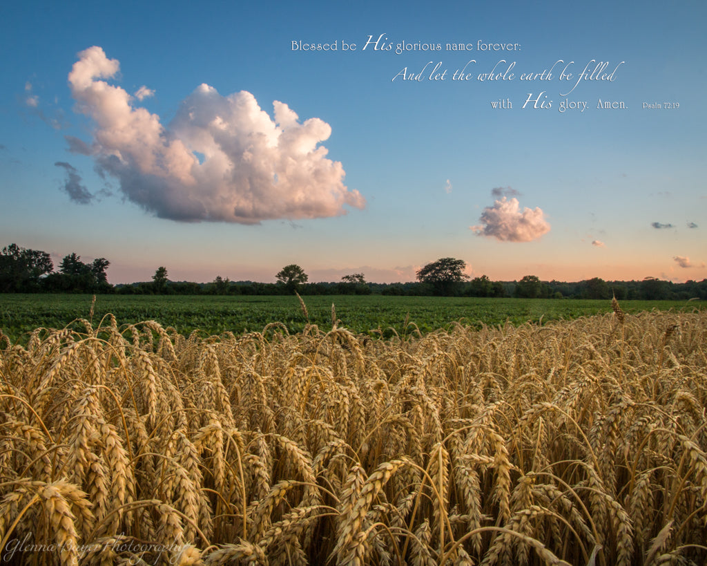 Wheat field and sunset in Ohio with scripture verse