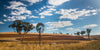 Windmill and Red Fields, Australia (0215)