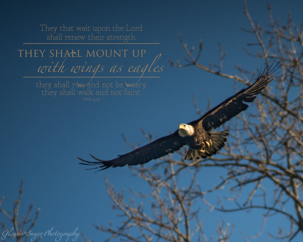 Soaring Eagle with scripture verse