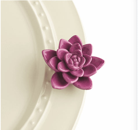 Get Growing Purple Succulent | Mini