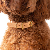 Dog & Human - Leather Dog Collar