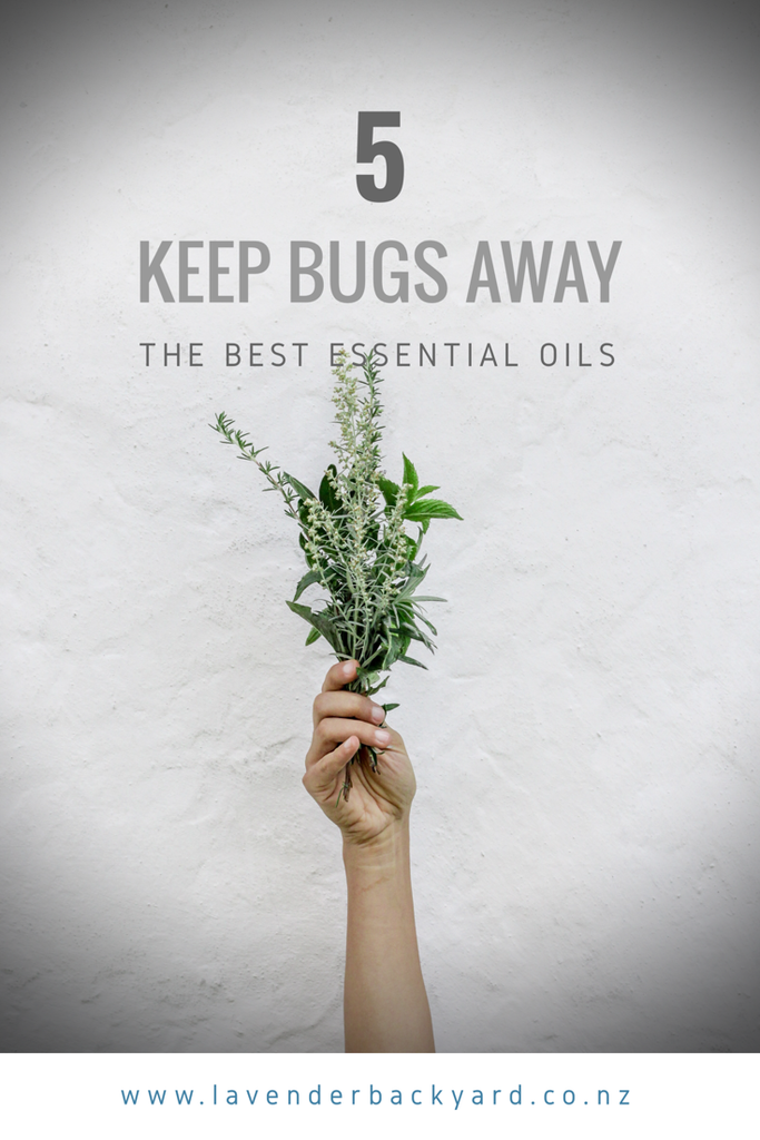 5 Best Essential Oils for Natural Insect Repellent from Lavender Backyard Garden, NZ Lavender Farm