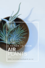 Home Decor | 5 Things to Know about Air Plants