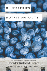 Good Health | Did you know Blueberries Nutrition Facts?