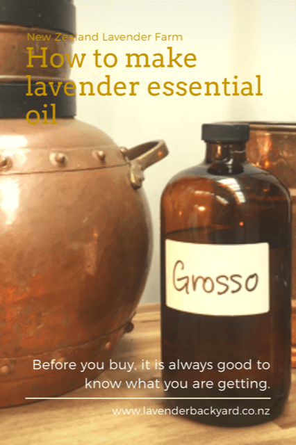 How to make lavender essential oil, Lavender Backyard Garden, NZ lavender farm