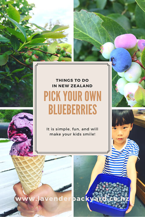 Things to Do in New Zealand | Pick Your Own Blueberries