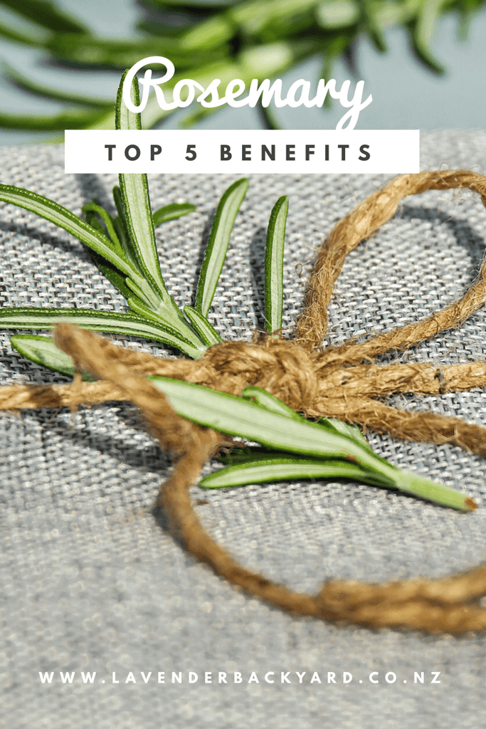Top 5 Impressive Benefits of Rosemary, NZ Herb Farm, Lavender Backyard Garden