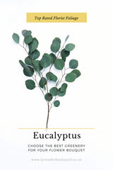 Eucalyptus | Best Foliage for Flower Bouquet