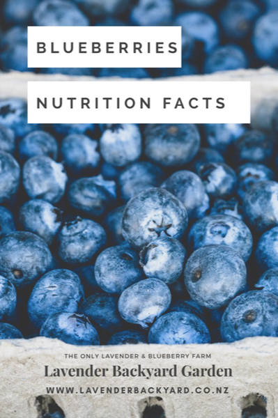 Blueberries Nutrition Facts for good health, Lavender Backyard Garden, the only Blueberry and Lavender farm in New Zealand.