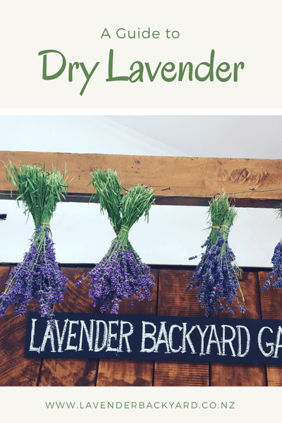 How to dry Lavender from Lavender Backyard Garden, a NZ lavender herb farm