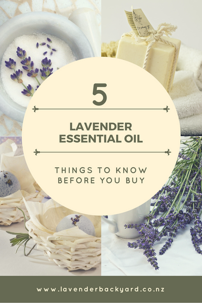 Lavender Essential Oil: Things to know before you buy. Lavender Backyard Garden