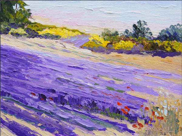 Lavender and Yellow by Marion Hedger, Lavender Backyard Garden, NZ
