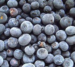 Frozen Blueberries at Lavender Backyard Garden