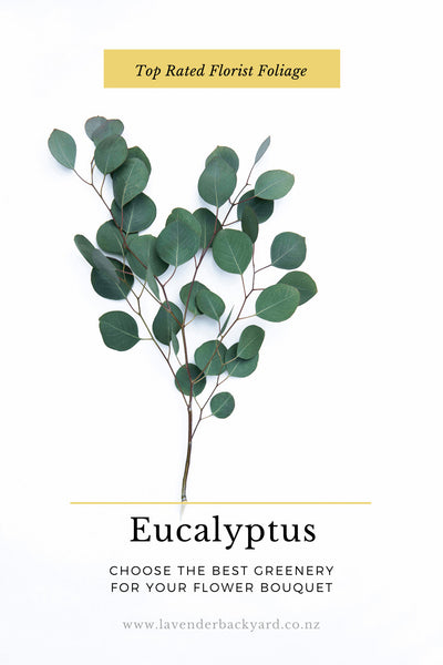 Top Rated Florist Foliage: Eucalyptus, Choose The Best Greenery For Your Flower Bouquet, NZ Lavender Herb Farm