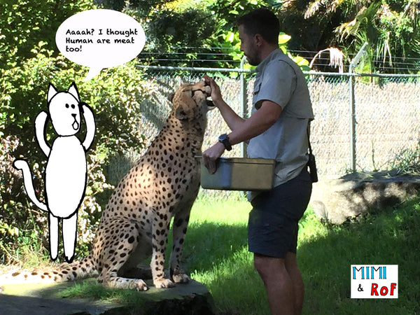 Auckland Zoo, New Zealand, Auckland, Holiday, Places to go