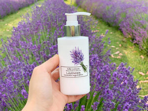 Lavandula Angustifolia - English Lavender Silk Lotion