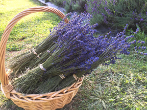 Lavender Dried Flowers - Lavandula Angustifolia (Pacific Blue)