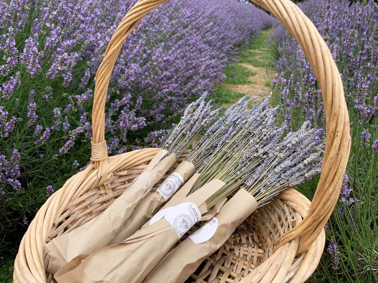 Lavender Dried Flowers - Lavandula x Intermedia (Super)