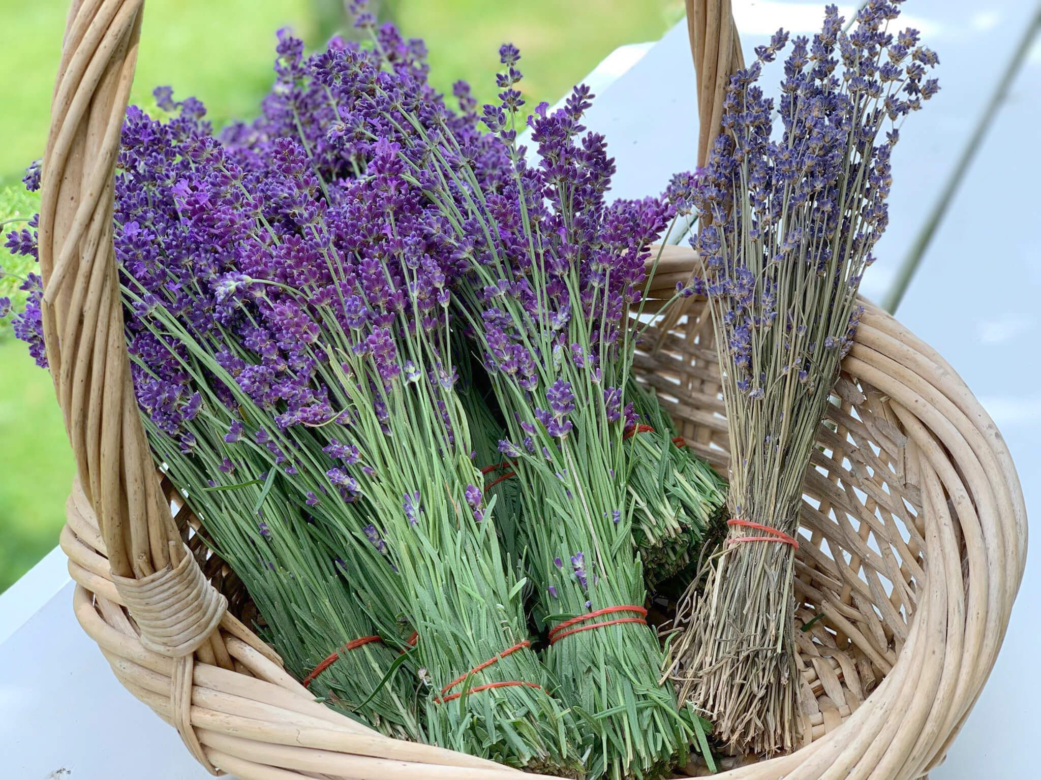 Lavandula Angustifolia dried flower, New Zealand Lavender Farm