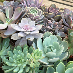 Variety of types of succulent plants available at Zensability