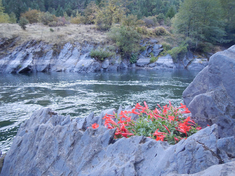 wild and scenic rogue river wild flowers indian paintbrush